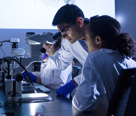 A professor and student view flies under a microscope.