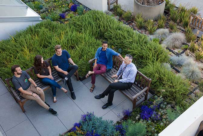 A group of students talks with a professor in a rooftop garden.