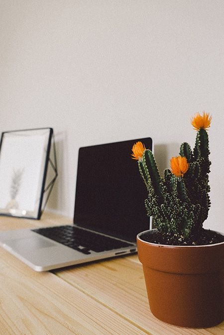 a potted cactus next to a laptop