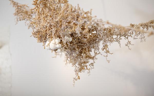 Amanda Evans (1) B.F.A./Sculpture
